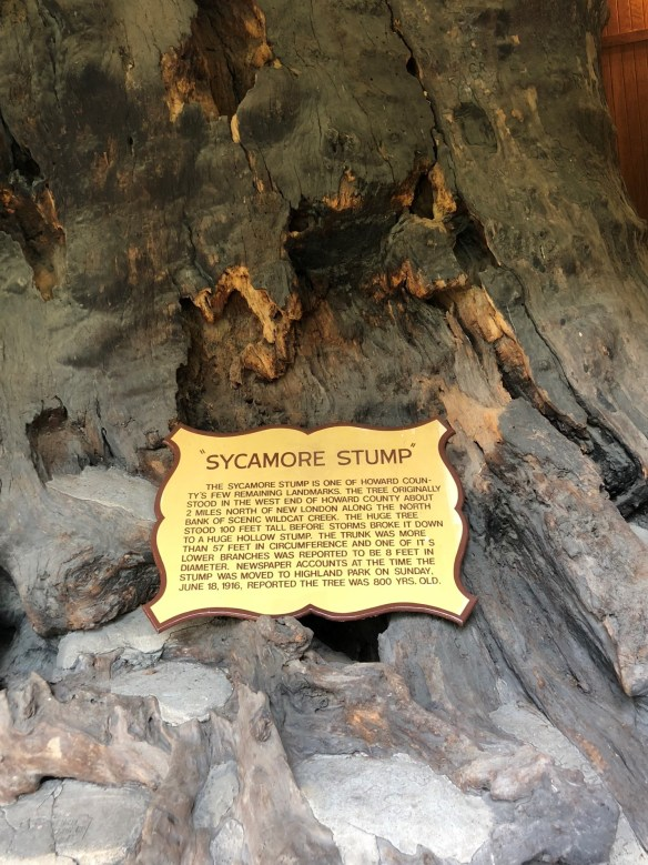 Kokomo Sycamore stump sign.jpg