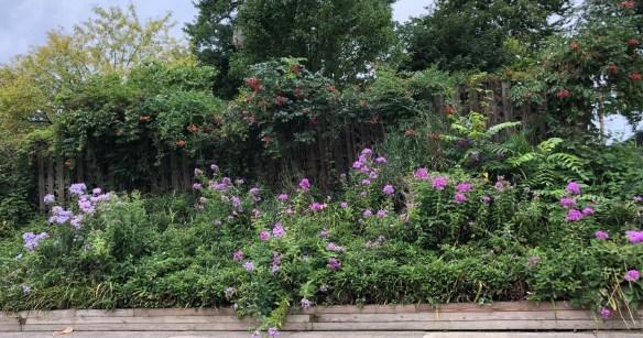 Kokomo Indiana garden.jpg