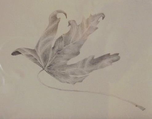 Kokomo leaf drawing.jpg