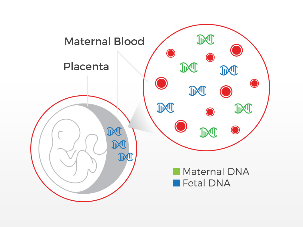 Non-Invasive Prenatal Paternity Test | While Pregnant ...