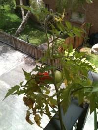 Balcony Container Garden - Mini Container Gardening