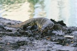 Still into my reptiles.