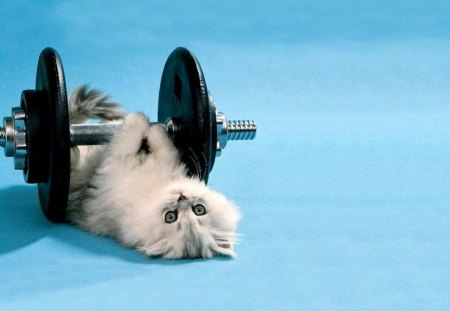Cute Pet Animals Wallpapers Cat Fitness Cats Amp Animals Background Wallpapers On