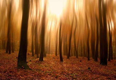Free Fall Desktop Wallpaper Downloads Blurry Forest Photography Amp Abstract Background