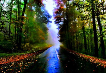 Free Fall Leaves Desktop Wallpaper Autumn Road Forests Amp Nature Background Wallpapers On