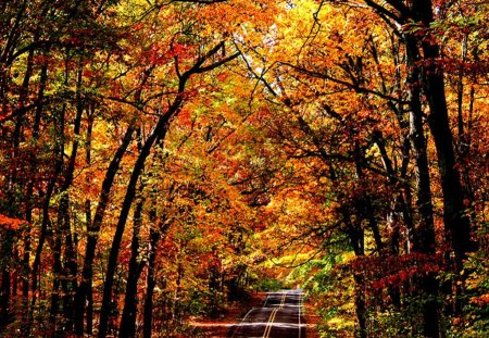 Desktop Wallpaper Fall Foliage Maine Forest Forests Amp Nature Background Wallpapers On