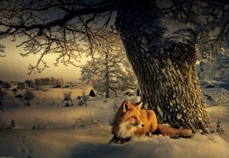 Cute Gingerbread Wallpaper Winter Fox Winter Amp Nature Background Wallpapers On