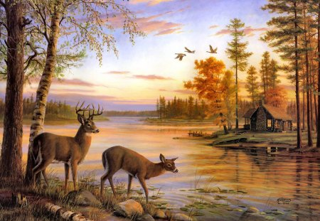 Sunset In Forest Deer Amp Animals Background