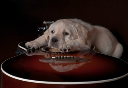 Cute Gingerbread Wallpaper Cute Dog And A Guitar Dogs Amp Animals Background