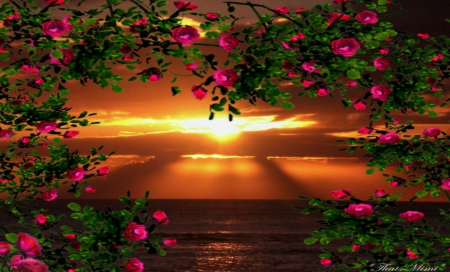 Cute Gingerbread Wallpaper Floral Sunset Sunsets Amp Nature Background