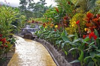 Tropical Garden with Waterfall - Flowers & Nature ...