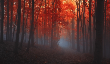 Fall Mist Wallpaper Red Forrest Mist Forests Amp Nature Background Wallpapers