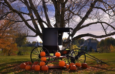 Fall Pumpkin Wallpaper Desktop Amish Buggy Fields Amp Nature Background Wallpapers On
