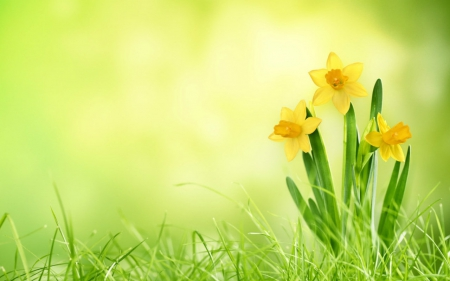 Cute Wallpapers For Springtime Yellow Flowers 3d And Cg Amp Abstract Background