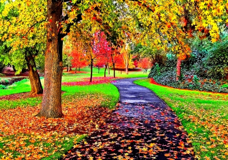 Fall Coffee Wallpaper Samsung 4 Autumn Colors Views Of Lovely Fall Leaves Forces Of