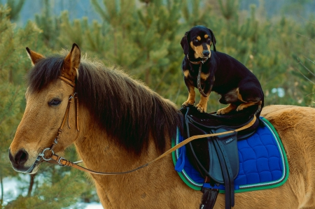 Cute Puppy Wallpapers Downloads Dog And Horse Dogs Amp Animals Background Wallpapers On