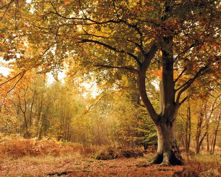 Fall Evening Wallpapers Autumn Scene Forests Amp Nature Background Wallpapers On