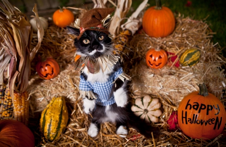 Happy Fall Desktop Wallpaper Scarecrow Cat Cats Amp Animals Background Wallpapers On