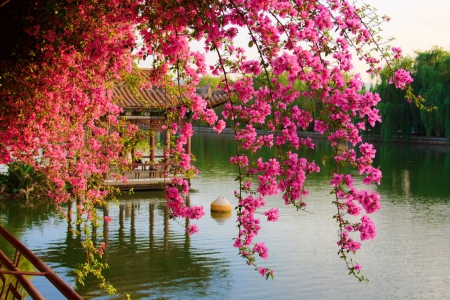 Spring blossoms  Flowers  Nature Background Wallpapers