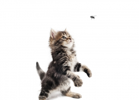 Cute Little Cat For Wallpaper Catching Flies Cats Amp Animals Background Wallpapers On