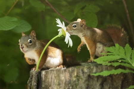Cute N Lovely Wallpapers Romantic Squirrel Squirrels Amp Animals Background