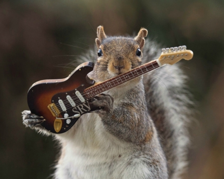 Cute Lizard Wallpaper Guitarist Squirrels Amp Animals Background Wallpapers On
