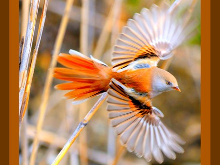 Cute Fish Iphone Wallpaper Iphone Wallpaper Beautiful Flying Birds