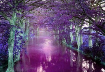 purple nature things forest background wallpapers desktop backgrounds river pretty hd beauty forests dragon tree colors amazing