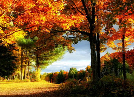 Orange Fall Wallpaper Autumn Sunshine Forests Amp Nature Background Wallpapers