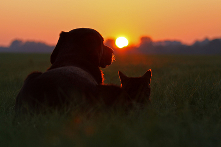 Cute Gingerbread Wallpaper Friends Sunset Dogs Amp Animals Background Wallpapers On