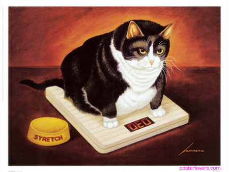 Cute Fat Cat Wallpaper Fat Cat Textures Amp Abstract Background Wallpapers On