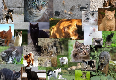 Cute Gingerbread Wallpaper Cat Collage Cats Amp Animals Background Wallpapers On