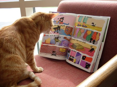 reading comic Cats Animals Background Wallpapers on