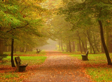Fall In Central Park Wallpaper Early Autumn Forests Amp Nature Background Wallpapers On