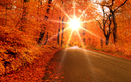 Fall Scenery Wallpapers Free Autumn Road Forests Amp Nature Background Wallpapers On