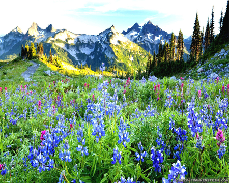 beautiful spring landscape - mountains