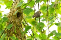 Bushtit with worms
