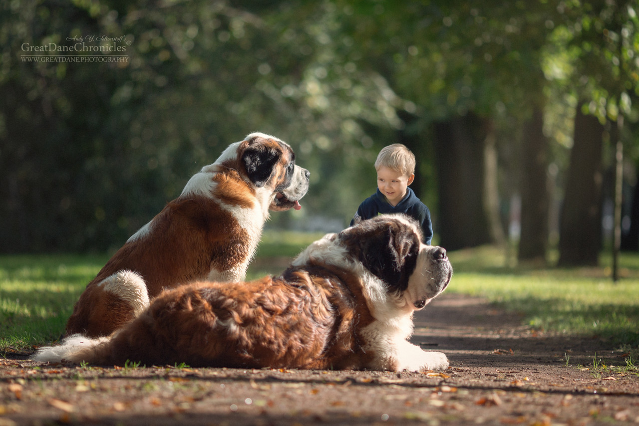 10 Reasons Why Big Dogs Are Definitely Dangerous For