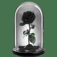 Παντοτινό τριαντάφυλλο - Μαύρο Αποχυμωμένο μαύρο τριαντάφυλλο