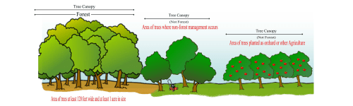 small resolution of examples of forest vs tree canopy