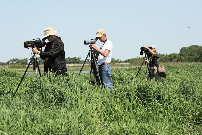 Marsh bird monitoring