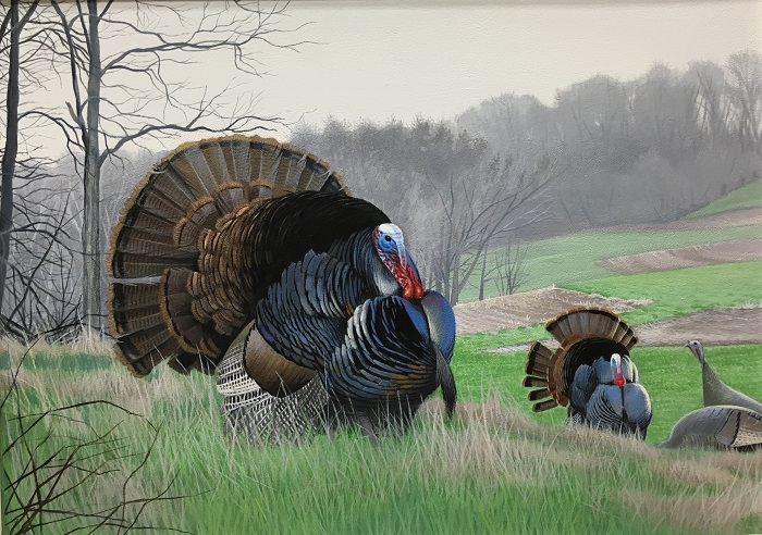 This painting showing turkeys in a Wisconsin farmland setting, submitted by Caleb Metrich of Lake Tomahawk, took first prize in the 2017 Wild Turkey Stamp design contest.
