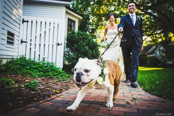 Want To Include Your Dog at Your Wedding? Read This First!