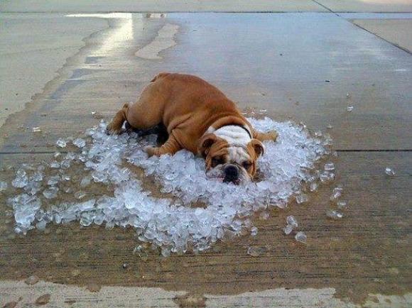 Great idea, dog.