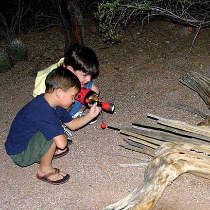 family-flashlight-tours-at-the-desert-botanical-garden