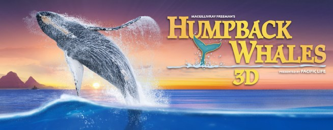 Humpbackwhales_web