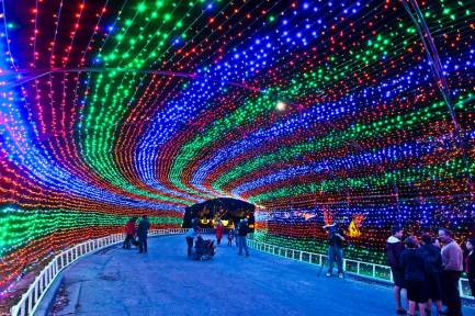 trail-of-lights