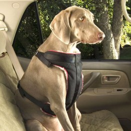 pet-seat-belt-1