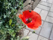 playfully bee-ing away... :)