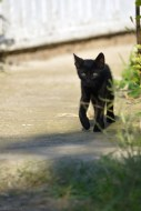 meow-ybe I can go for a walk...